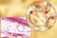 Vette cellen, micrograaf en 3D illustratie Stock Afbeeldingen