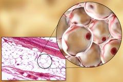 Vette cellen, micrograaf en 3D illustratie Royalty-vrije Stock Afbeelding