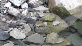 Vette groene kikkerzitting in zuiver water op de stenen stock video