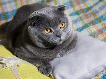 Vette kat stock foto