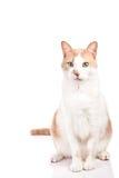 Vette kat Stock Afbeeldingen