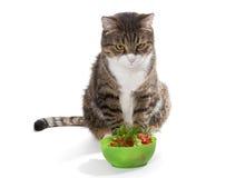 Vette kat en dieet Stock Afbeeldingen