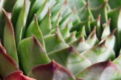 Vettige bladeren Royalty-vrije Stock Afbeeldingen