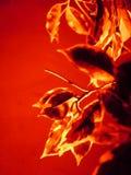 Vettore astratto floreale Fotografie Stock Libere da Diritti