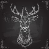 Vettore - cervo - tiraggio della mano, su fondo Royalty Illustrazione gratis