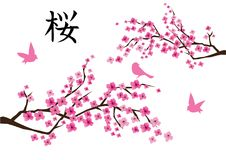 Vettore Cherry Blossom And Pink Birds Immagine Stock
