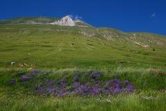 vettore de montagne Photo stock