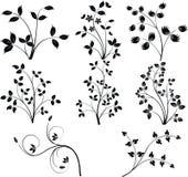 Vettore degli elementi di disegno floreale Immagine Stock Libera da Diritti