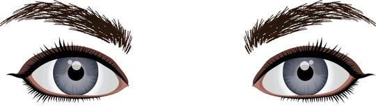 Vettore degli occhi di Brown isolato su fondo bianco illustrazione vettoriale