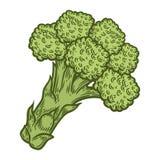 Vettore dei broccoli Isolato su priorità bassa bianca Ingrediente di alimento dei broccoli Immagini Stock Libere da Diritti