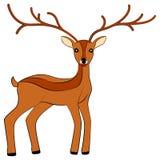 Vettore dei cervi royalty illustrazione gratis