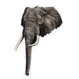 Vettore dei grafici di schizzo dell'elefante royalty illustrazione gratis