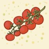 Vettore dei pomodori ciliegia La filiale dei pomodori di ciliegia Fotografia Stock