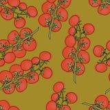 Vettore dei pomodori ciliegia Pomodori ciliegia senza cuciture del fondo del modello Immagini Stock