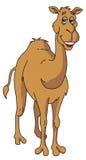 Vettore del cammello Immagine Stock Libera da Diritti