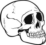 Vettore del cranio Fotografia Stock