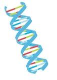 Vettore del DNA Fotografie Stock