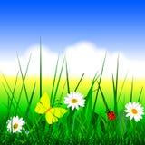 Vettore del fondo dell'erba di estate illustrazione vettoriale
