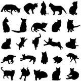Vettore del gatto Fotografia Stock