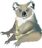 Vettore del Koala Fotografia Stock Libera da Diritti
