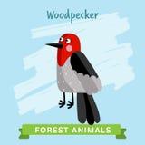 Vettore del picchio, animali della foresta Fotografia Stock Libera da Diritti
