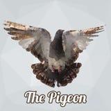 Vettore del poligono dell'uccello del piccione Fotografie Stock Libere da Diritti