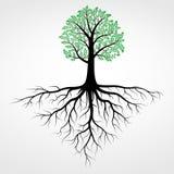 Vettore dell'albero Immagine Stock Libera da Diritti