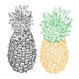 Vettore dell'ananas Immagine Stock