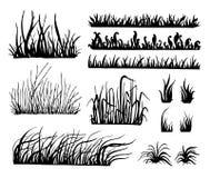 Vettore dell'erba, Fotografie Stock