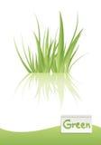 Vettore dell'erba verde Immagini Stock