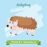 Vettore dell'istrice, animali della foresta Fotografie Stock