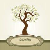 Vettore dell'oliva dell'annata Immagine Stock Libera da Diritti