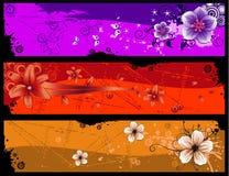 Vettore della bandiera del fiore Fotografie Stock