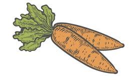 Vettore della carota Isolato su priorità bassa bianca Ingrediente di alimento della carota Immagini Stock