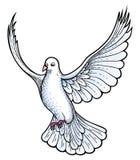 Vettore della colomba di bianco Fotografie Stock