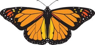 Vettore della farfalla di monarca Immagini Stock