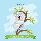 Vettore della koala, animali della foresta Fotografie Stock Libere da Diritti