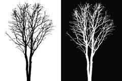 Vettore della siluetta del ramoscello dell'albero Immagini Stock