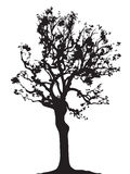 Vettore della siluetta del ramoscello dell'albero Fotografia Stock