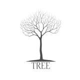 Vettore della siluetta dell'albero Fotografie Stock
