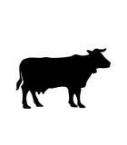 Vettore della siluetta della mucca Immagini Stock