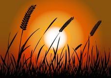 Vettore della siluetta di tramonto del campo di mais Immagine Stock