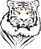 Vettore della tigre Fotografia Stock Libera da Diritti