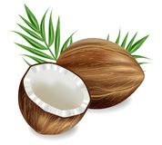 Vettore delle noci di cocco realistico fondo esotico tropicale del modello Illustrazioni dettagliate 3d illustrazione vettoriale