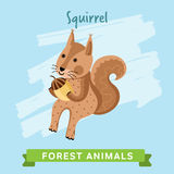 Vettore dello scoiattolo, animali della foresta Immagini Stock