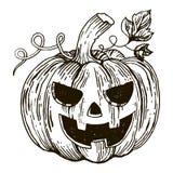 Vettore di stile dell'incisione della zucca di Halloween Immagini Stock Libere da Diritti