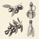 Vettore disegnato Olive Branch Bottle Set Hand illustrazione vettoriale