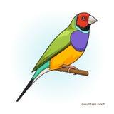 Vettore educativo del gioco dell'uccello del fringillide di Gouldian illustrazione di stock