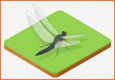 Vettore ENV della libellula Fotografie Stock