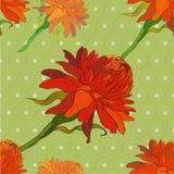 Vettore Ginger Flowers Reticolo senza giunte Fotografie Stock